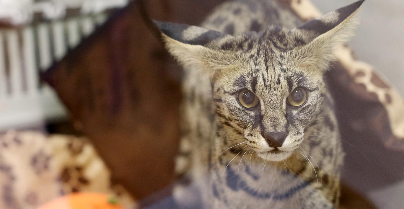 Номера подходят для комфортного размещения крупных пород кошек